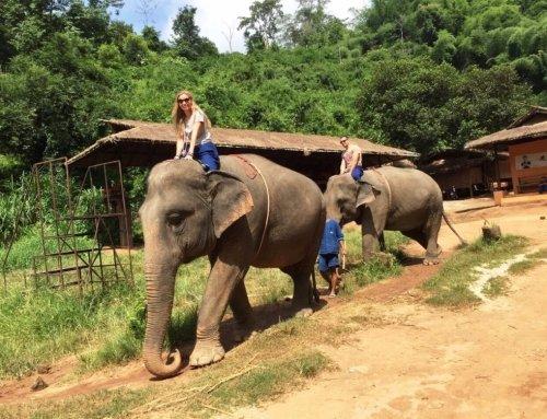 Chiang Rai Honeymoon Walking With Elephants – Anantara Golden Triangle Elephant Camp & Resort