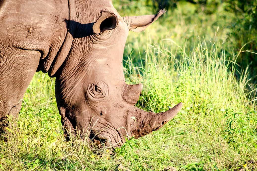 Victoria Falls | Sanctuary Sussi & Chuma | Africa Safari | Rhinos | Bubbly Moments