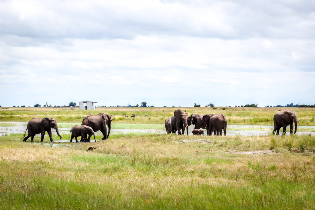 Elephant | Safari | Botswana | Chobe National Park | Sanctuary Chobe Chilwero Camp | Bubbly Moments
