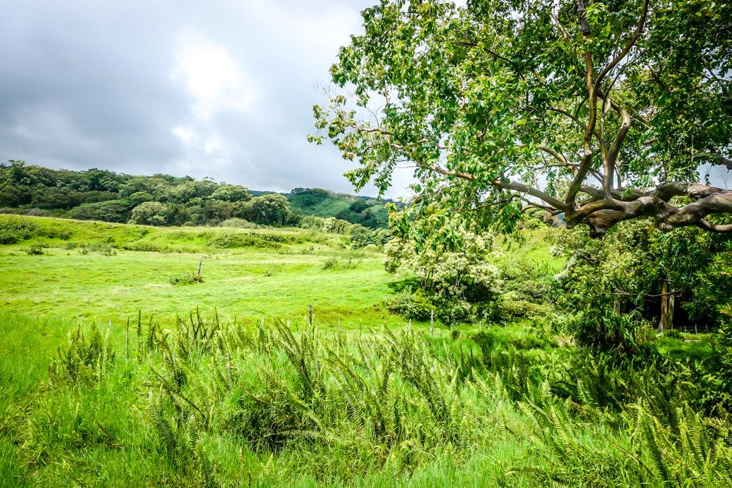 Rainbow Eucalyptus Trees | Driving the Road to Hana | Maui | Hawaii | Bubbly Moments