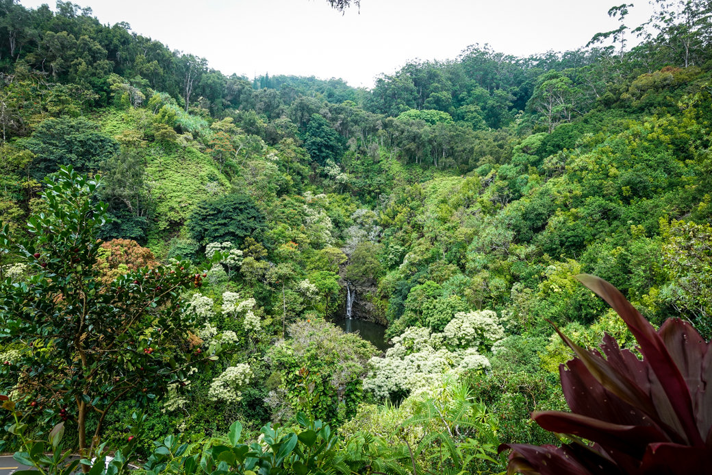 Garden of Eden Arboretum | Driving the Road to Hana | Maui | Hawaii | Bubbly Moments