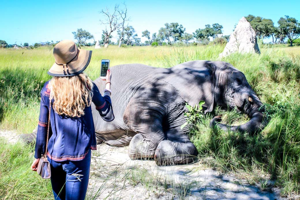 Botswana Okavango Delta Safari | Sanctuary Baines' Camp | Travel | Africa | Safari | Bubbly Moments