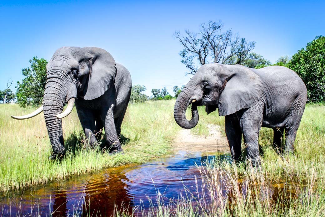 Botswana Okavango Delta Safari | Sanctuary Baines Camp | Travel | Africa | Safari | Bubbly Moments