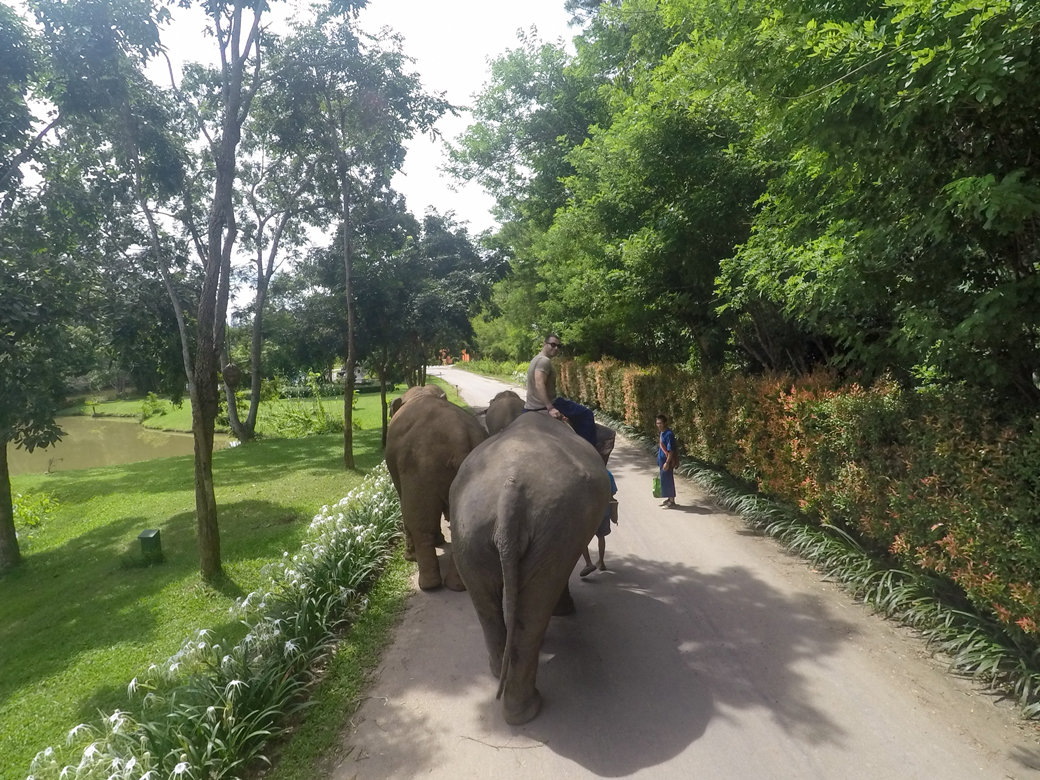 Chiang Rai Honeymoon | Golden Triangle | Elephant Camp | Anantara Resort | Mekong River | Myanmar | Laos | Bubbly Moments