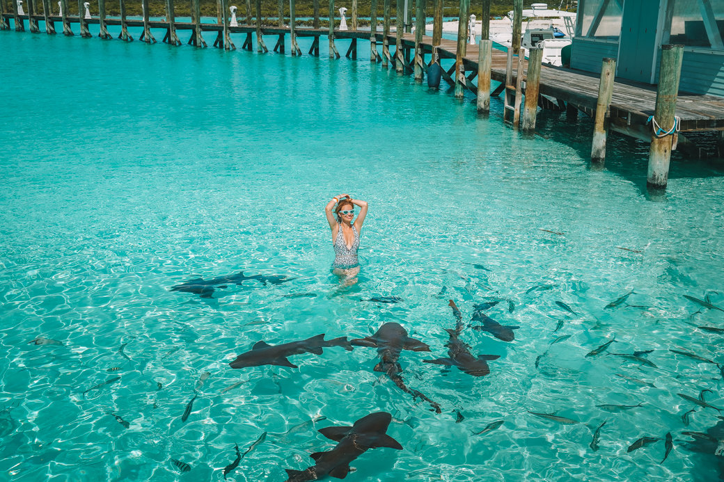 Swimming with Pigs and Sharks on a Day Trip to the Exumas