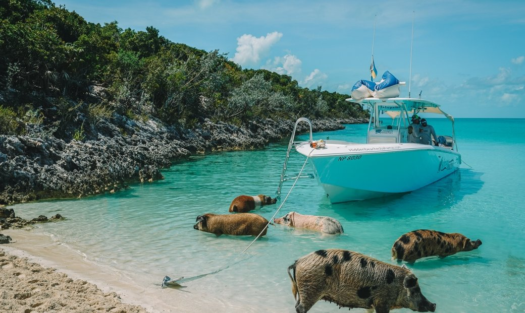 Nassau to Exuma   Iguana Beach   Swim with Sharks   Nurse Shark   Swimming with Pigs   Pig Island   Travel   Bahamas   Exumas   Wanderlust   Bubbly Moments